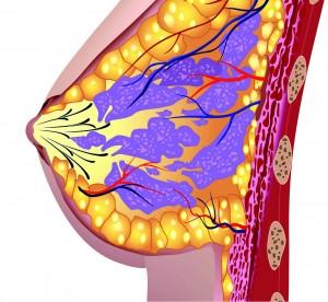 Die Krankenkassen übernehmen ab dem 50. Lebensjahr die Kosten für diese Vorsorgeuntersuchung. Bei Frauen mit Brustkrebs in der Familie sogar eine MR-Mammografie, fünf Jahre vor Erkrankung der jüngsten erkrankten Angehörigen. Foto: ©depositphotos.com/emaria