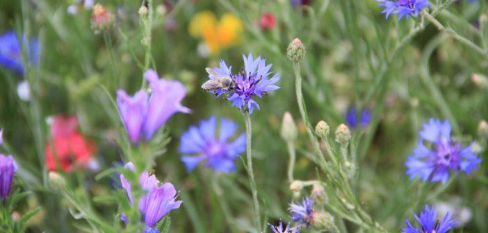 Pestizide machen Bienen das Lernen schwer